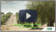 megiddo_video