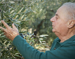 Visit Your Olive Tree